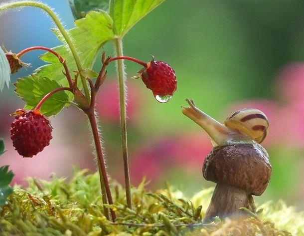 macro-photography-snails-vyacheslav-mishchenko-5-1