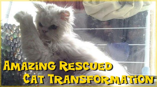 不健康だったネコが救助されて元気になるまでの写真集