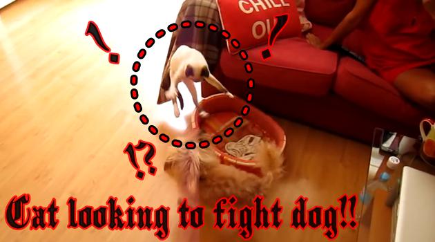 素直な犬とツンデレな猫!陽気な音楽に乗せて犬VS猫の戦い