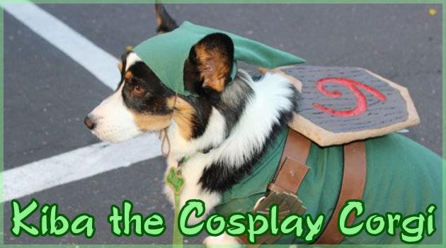 色々な人気キャラクターにコスプレするコーギー犬!