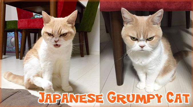 日本のグランピーキャット!?怒り顔のネコ