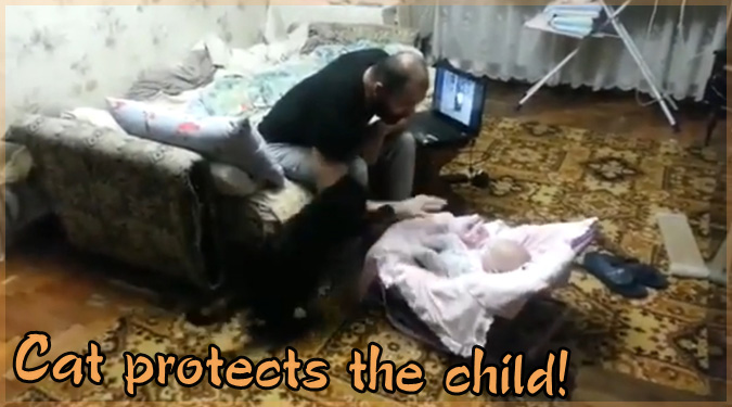 飼い主に容赦なく攻撃!赤ちゃんを守るネコさんの勇敢な動画