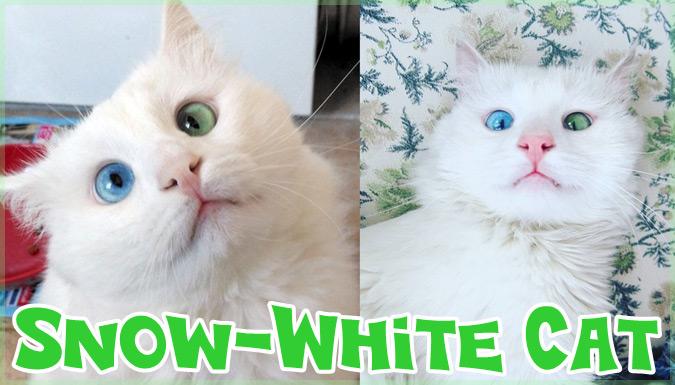 世界で注目の青と緑の目を持つ美しすぎるオッドアイの