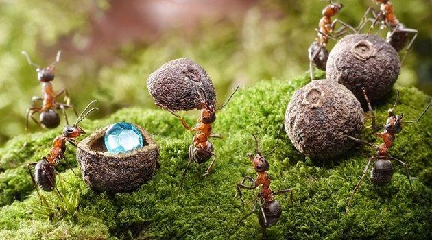 信じられないほど美しい!アリの生活を撮影した写真集!
