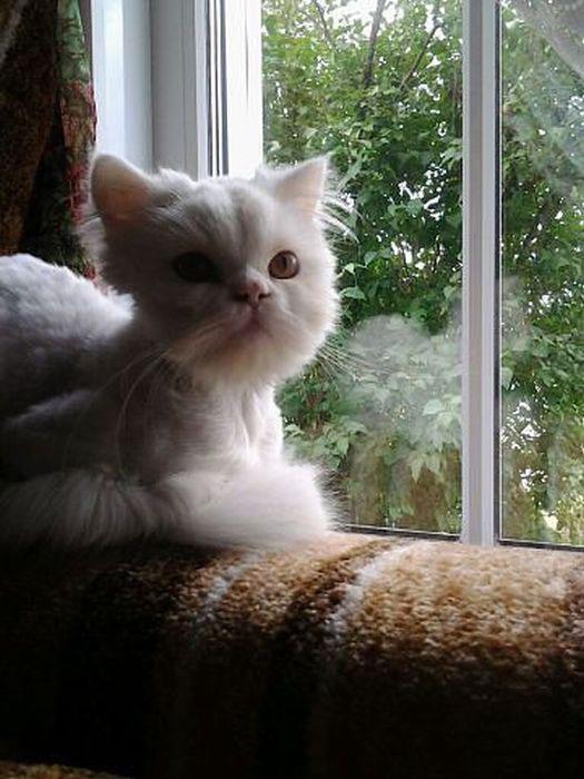 cat_rescue_15