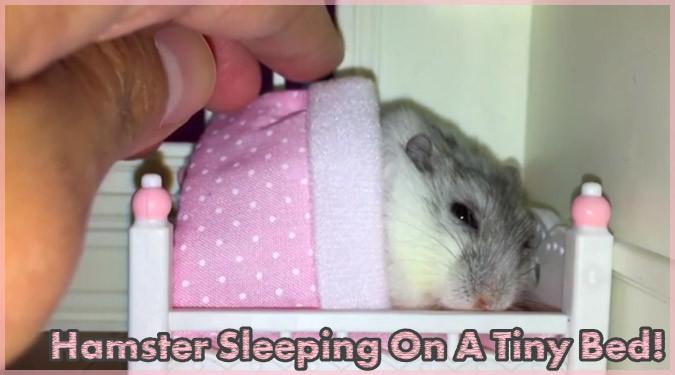 ベッドの中でウトウトと眠りに付くハムスターの癒し系動画