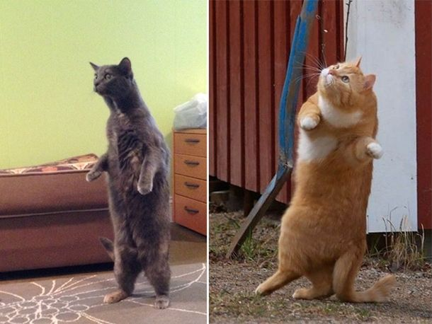 standing-cats1