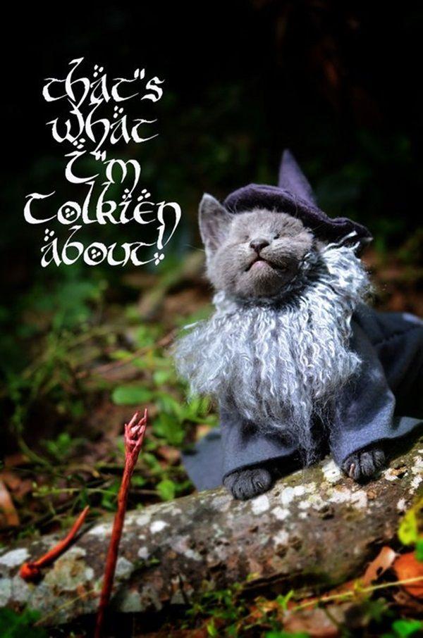 des-chatons-deguises-en-personnages-de-la-pop-culture8