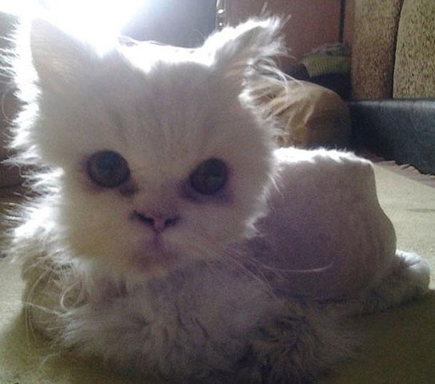 cat_rescue_09