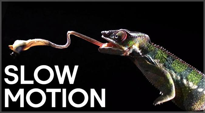 動物たちの攻撃や捕食の瞬間をスローモーションで撮影した映像!