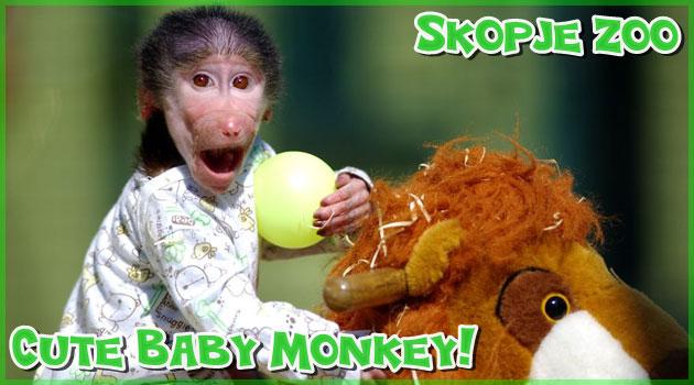 表情豊かな小さなお猿の赤ちゃんのとても純粋な写真集