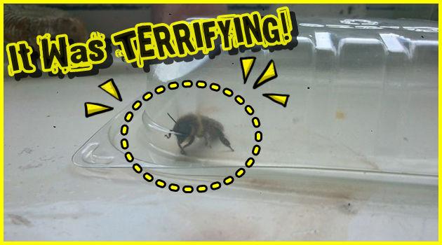 ミツバチに包囲されたイギリス人!大迫力の異常発生!