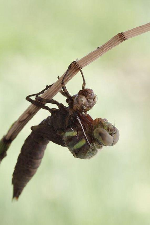 04-birth_dragonfly