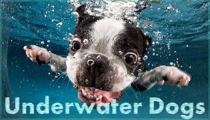 水中に飛び込んだ瞬間の犬の表情をとらえた大迫力の写真作品!