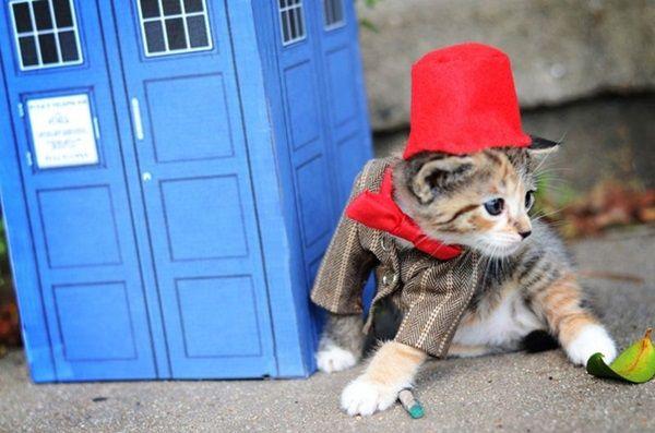 des-chatons-deguises-en-personnages-de-la-pop-culture11