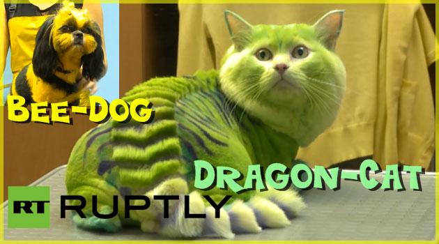 不思議な毛色を持つ未来の生物のような猫と犬が出現?