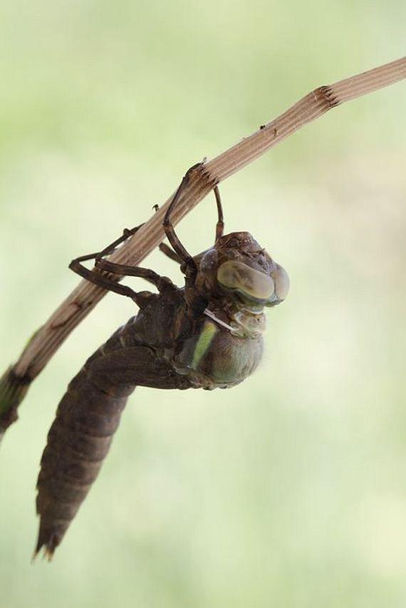 03-birth_dragonfly