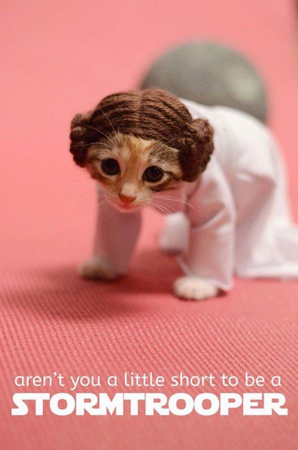 des-chatons-deguises-en-personnages-de-la-pop-culture14