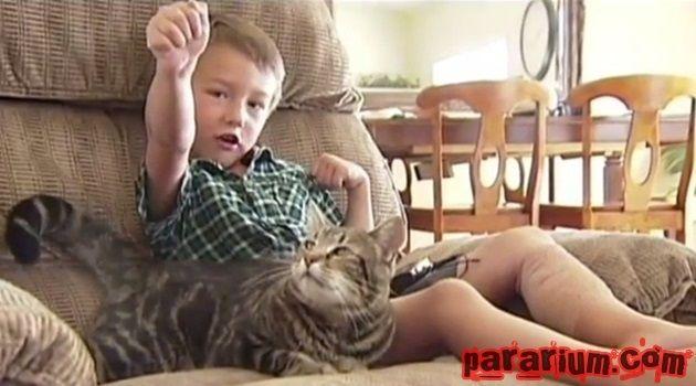 pararium-cat