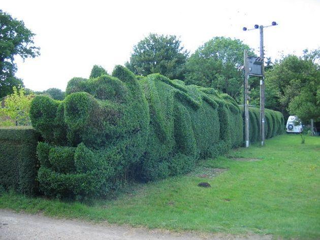 dragon-hedge-2