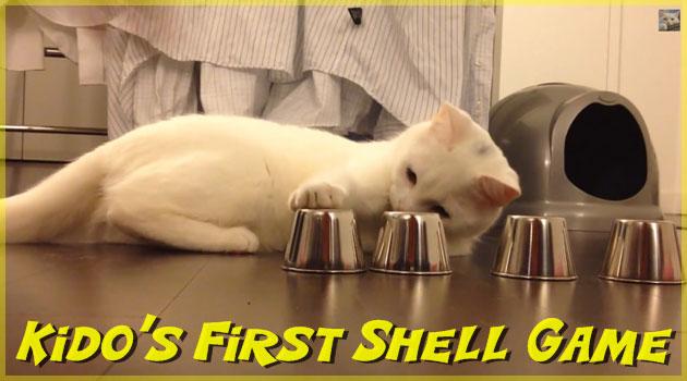 カップの中に隠したボールを当てるシェルゲームの達人ネコさん!