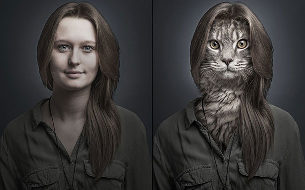 cat-josianne_2961551k
