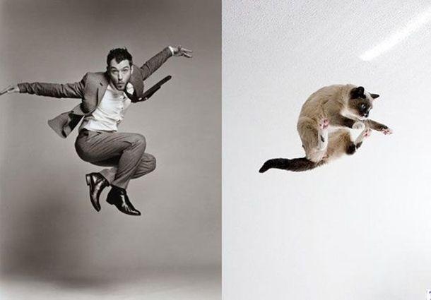 1384788387_cats_vs_models_02
