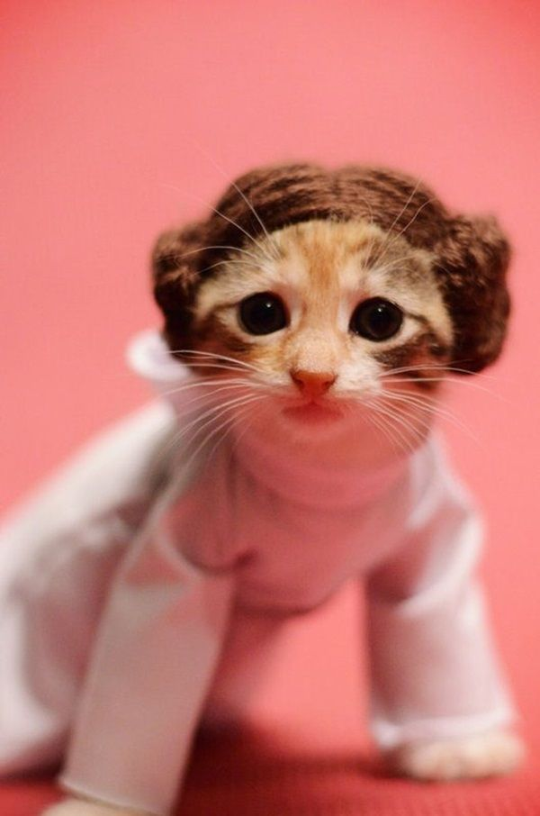 des-chatons-deguises-en-personnages-de-la-pop-culture15