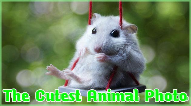 可愛すぎて癒される動物達の25枚の胸キュン写真集!