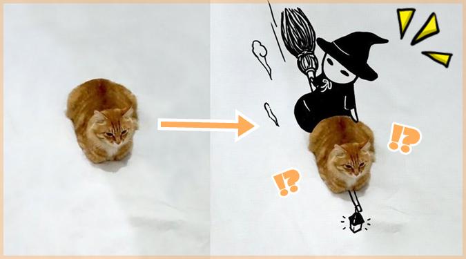 一枚のキュートなネコちゃんの写真から作る面白いコラ画像集!