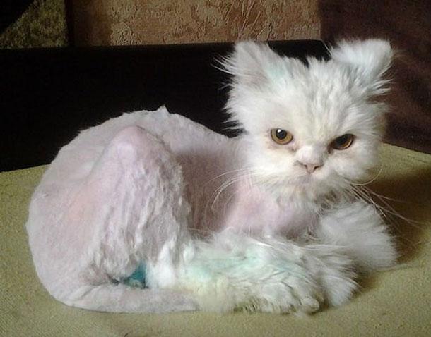 cat_rescue_12