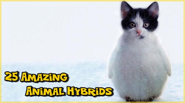 2種類の動物をミックスした可愛くて神々しいハイブリッド動物!