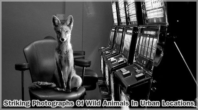都市部と野生動物を組み合わせた非日常的な写真集