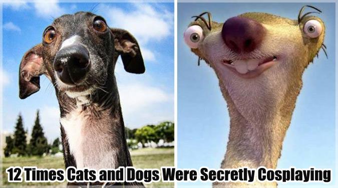 有名人や人気キャラクターに似ているイヌとネコを集めた12枚の画像集