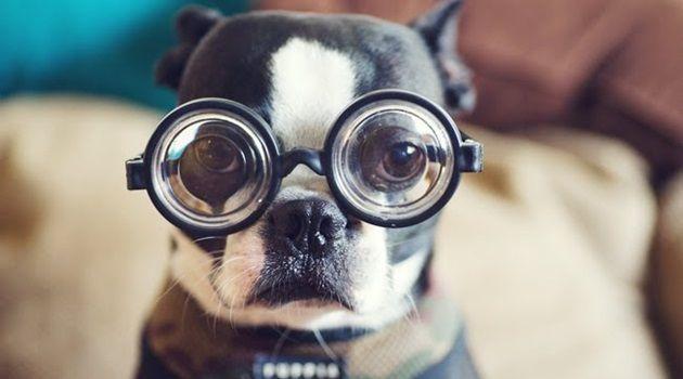犬についての興味深い10の出来事!あまり知られていない事実