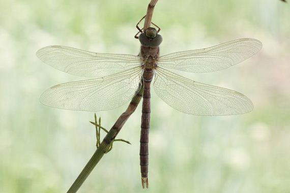 10-birth_dragonfly