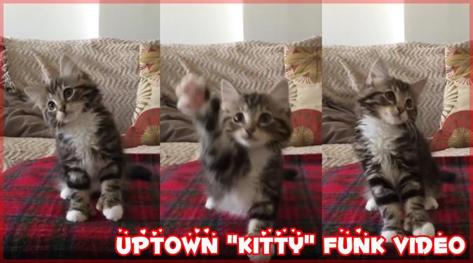 アップタウン・ファンクの音楽に合わせて踊る愛らしい子猫ちゃん