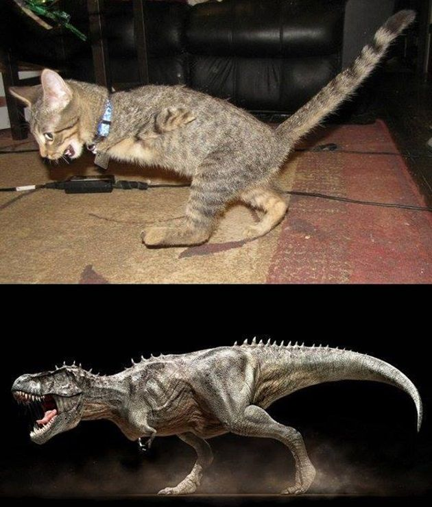 t-rex-kitty