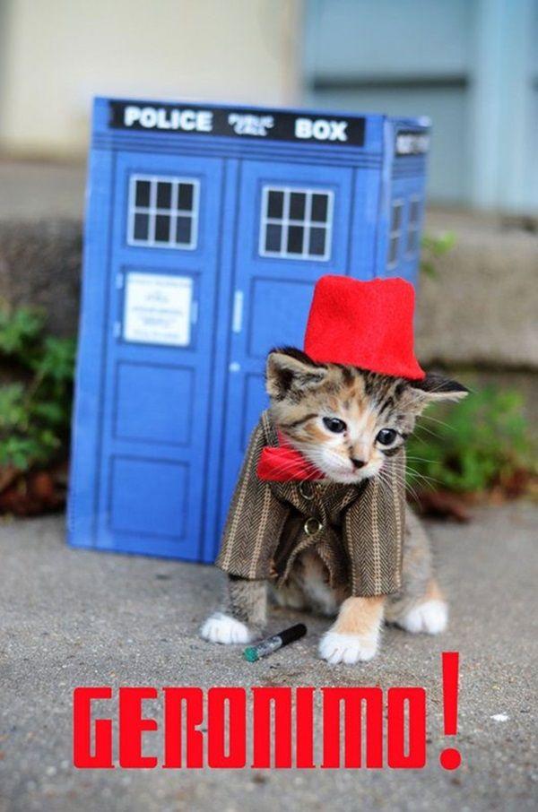 des-chatons-deguises-en-personnages-de-la-pop-culture10