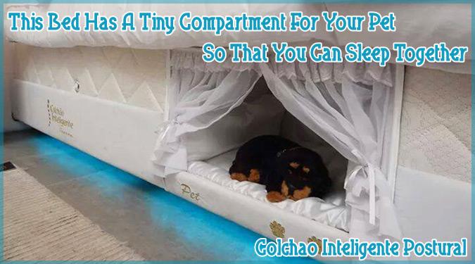 ペットと正しい距離感を保ちつつ一緒に眠ることができるアイデアベッド!
