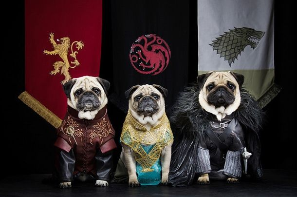 pugs-of-westeros-2