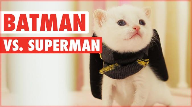 バットマンvsスーパーマンを再現した子猫たちの愛らしいショートムービー