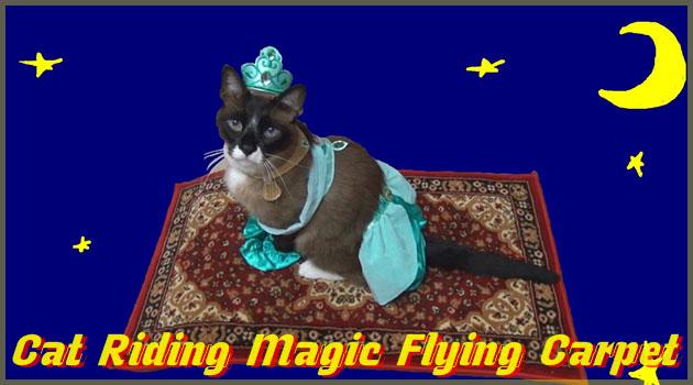 アラジンの魔法の絨毯に乗る可愛いらしいジャスミンキャット!