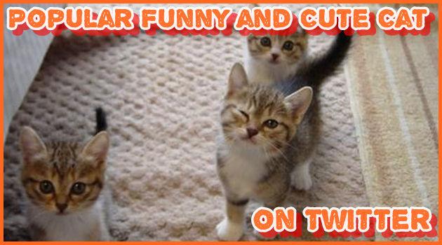 ネコ好きには堪らない!Twitterで人気の可愛くて笑えるネコ!