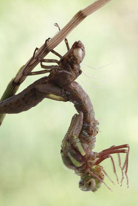 06-birth_dragonfly