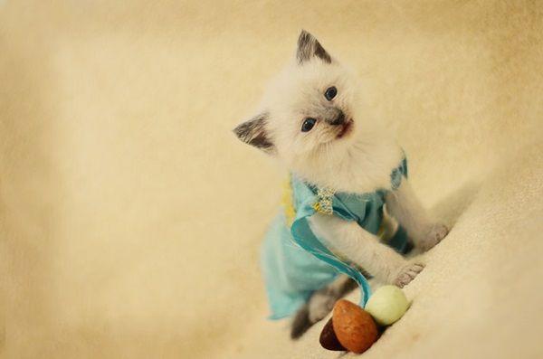 des-chatons-deguises-en-personnages-de-la-pop-culture2