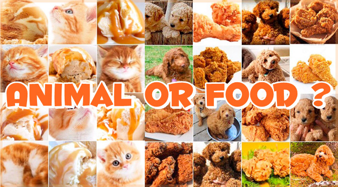 あなたは見分けることができる?動物と食べ物の比較集