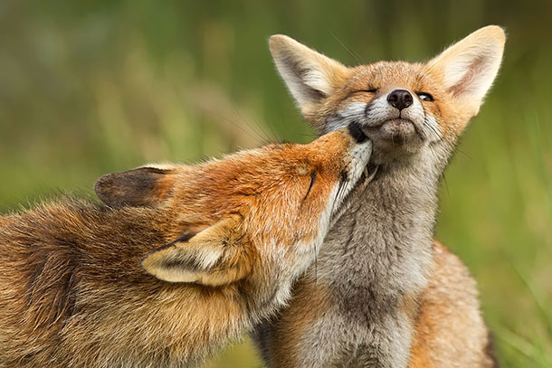 amazing-fox-photos-9