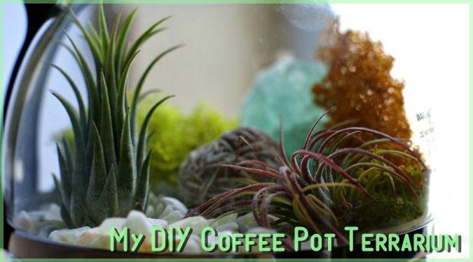 DIY好きにピッタリの可愛いコーヒーポットテラリウム!