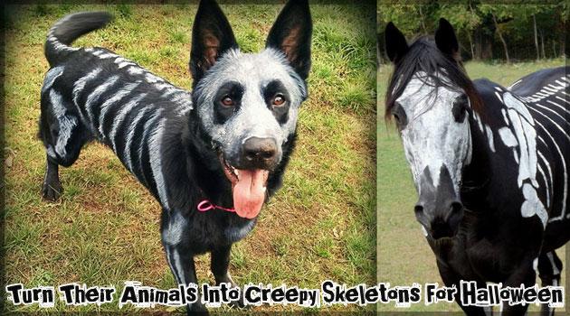 ハロウィンのための犬と馬の不気味な仮装ペイント!